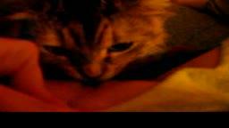 Al gatto piace leccare la figa